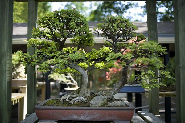 Jardins d 39 inspiration japonaise - Video bonsai jardin japonais ...